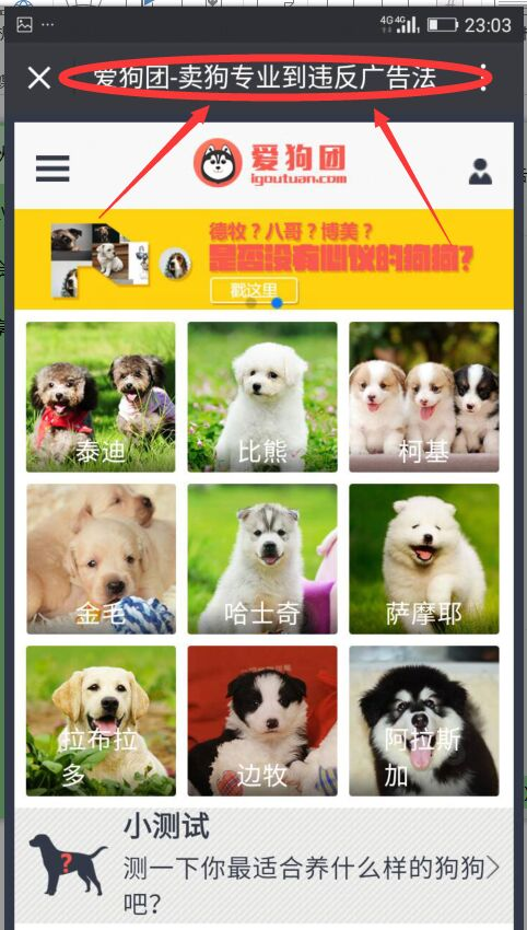 我要买狗2.jpg