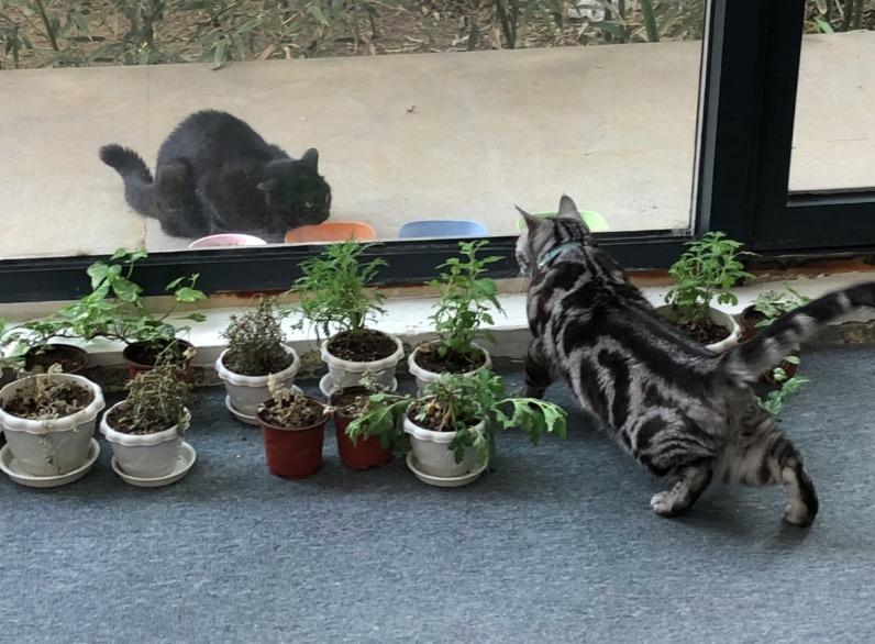 我们的猫.png